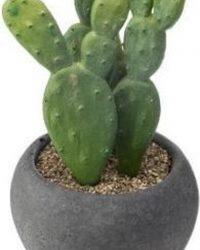 Cactus - Cactus Plant - Cactus Decoratie - Cactus Mini - Kamerplanten - Bloempotten - Bloembakken - Mix van 4
