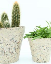 Cactus en vetplanten mix in ecocreme sierpot 2 stuks