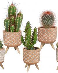 Cactus mix in terracotta betonpot op 3 pootjes | 5 stuks | Ø 5,5 cm | ↕ 8 - 13 cm