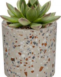 Echeveria Agevoides in grijze cilinder sierpot- geen groene vingers nodig