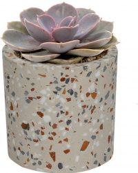 Echeveria Pearl of Neurenberg in grijze cilinder sierpot - geen groene vingers nodig