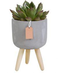 Echeveria mix in betonpot op 3 pootjes | 3 stuks | Ø 10,5 cm | ↕ 16-20 cm