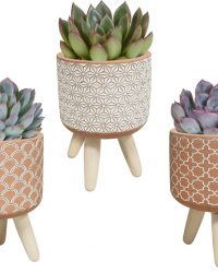 Echeveria mix in terracotta betonpot op 3 pootjes | 3 stuks | Ø 8,5 cm | ↕ 16 - 20 cm