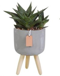 Gasteria/Haworthia mix in betonpot op 3 pootjes | 3 stuks | Ø 10,5 cm | ↕ 16-21 cm