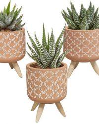 Gasteria/Haworthia mix in terracotta betonpot op 3 pootjes | 5 stuks | Ø 5,5 cm | ↕ 11 - 16 cm