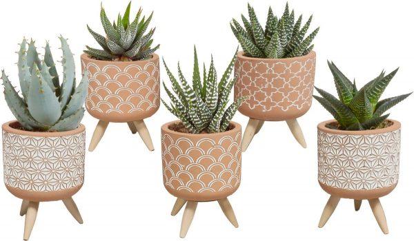 Gasteria/Haworthia mix in terracotta betonpot op 3 pootjes   5 stuks   Ø 5,5 cm   ↕ 11 - 16 cm