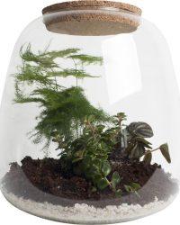 Hellogreen - Plant Puzzle - DIY Ecosysteem + Verlichting - Met 3 Plantsoorten - Asparagus Plumosos, de Peperomia Picollo Banda en de Sedum Tornado
