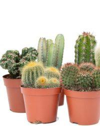 Ikhebeencactus Interieur set (8,5 cm) 6st Cactus