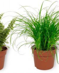Set van 4 Kamerplanten - 2x Cyperus Zumula & 1x Aloe Vera Clumb & 1x Nephrolepis Vitale - ± 25cm hoog - 12cm diameter