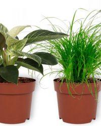 Set van 4 Kamerplanten - Aloe Vera & Asparagus Plumosus & Cyperus Zumula & Philodendron White Wave - ± 25cm hoog - 12cm diameter