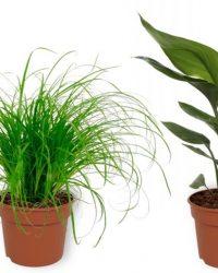 Set van 4 Kamerplanten - Aloe Vera & Cyperus Zumula & Nephrolepis Vitale & Strelitzia Reginae - ± 25cm hoog - 12cm diameter