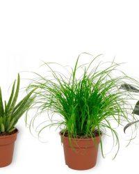 Set van 4 Kamerplanten - Aloe Vera & Cyperus Zumula & Philodendron White Wave & Sansevieria Superba - ± 25cm hoog - 12cm diameter