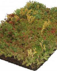 COVERGREEN® Sedum bodembedekker plantenmat (38 x 57 cm)