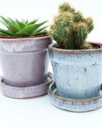 Cactus en vetplant mix in Sevilla pink sierpot