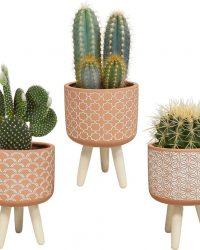 Cactus mix in terracotta betonpot op 3 pootjes | 3 stuks | Ø 10,5 cm | ↕ 20 - 26 cm