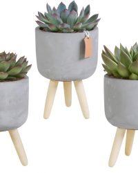 Echeveria mix in betonpot op 3 pootjes | 3 stuks | Ø 12 cm | ↕ 19-24 cm