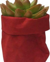 de Zaktus - Sedum Adolphii - bol cactus - paperbag toscana - rood - maat M