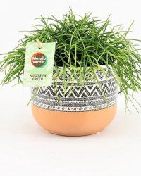 Cactus van Botanicly - Rotskoraal in gevormde keramiek pot als set - Hoogte: 20 cm - Rhipsalis Oasis