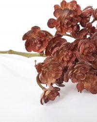 Cozinezz - kunstplant Echeveria - bruin - 20 cm hoog
