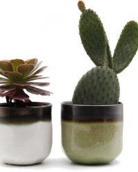 Ikhebeencactus cactus en vetplanten mix in 8,5cm Daan en Fleur sierpotten