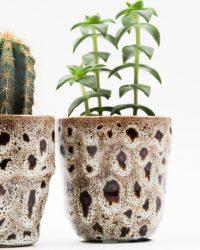 Ikhebeencactus cactus en vetplanten mix in Retro Roos sierpot 2 stuks