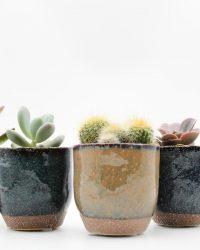 Ikhebeencactus cactus en vetplanten mix in sierpot Color Cato 5 stuks