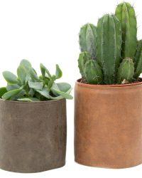 Interieur set Leather Lookie 2 stuks cactus en vetplanten mix