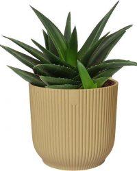 Cactus van Botanicly - Haworthia in beige ELHO plastic pot als set - Hoogte: 20 cm