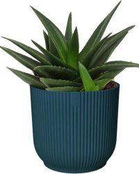 Haworthia West Jogoo in ELHO ® Vibes Fold Rond (diepblauw) ↨ 20cm - planten - binnenplanten - buitenplanten - tuinplanten - potplanten - hangplanten - plantenbak - bomen - plantenspuit