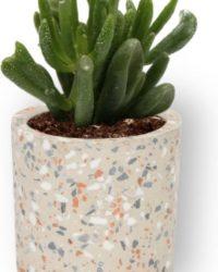 Kamerplant Crassula Horn Tree - Jadeplant - ± 12cm hoog - ⌀ 7cm - in grijzen cilinder pot