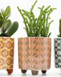 Ikhebeencactus Interieur set Retro River cactus en vetplanten mix in sierpot