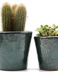 Interieur set Groene Geert cactus en vetplanten mix in sierpot