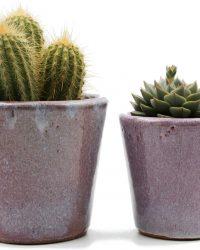 Interieur set Pink Paige cactus en vetplanten mix in sierpot